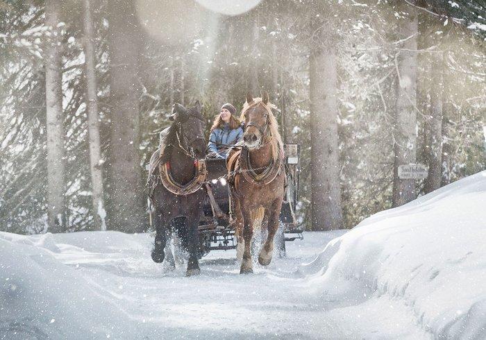 Pferdeschlittenfahrt im Wald